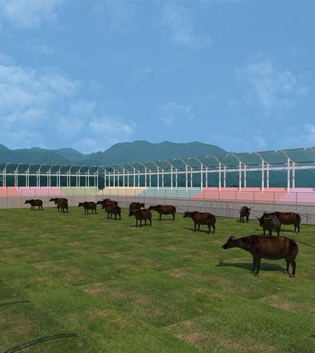 广西河池红沙畜牧交易市场斗牛场效果图