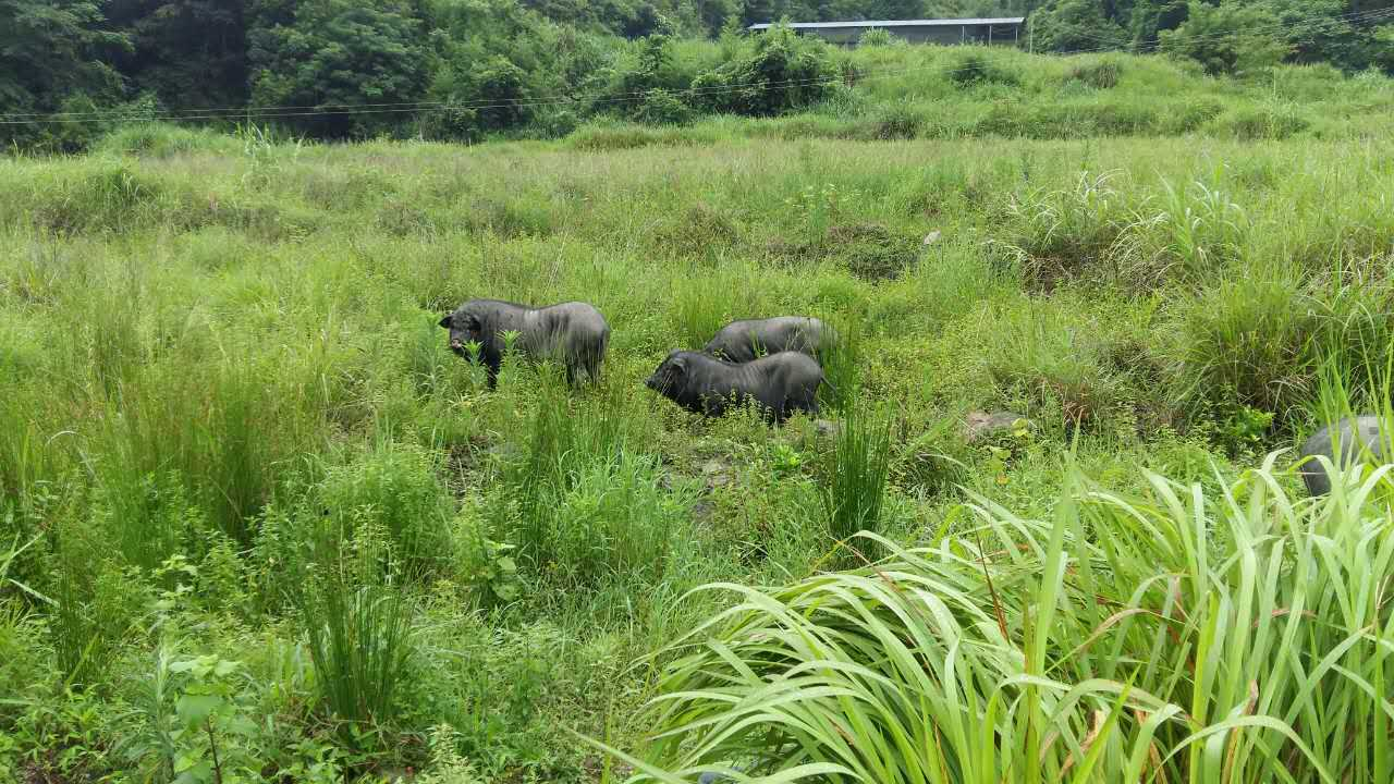 畜牧交易牛肉