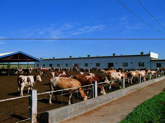 大型养牛场