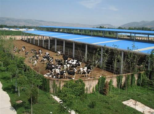 广西活畜牧交易市场
